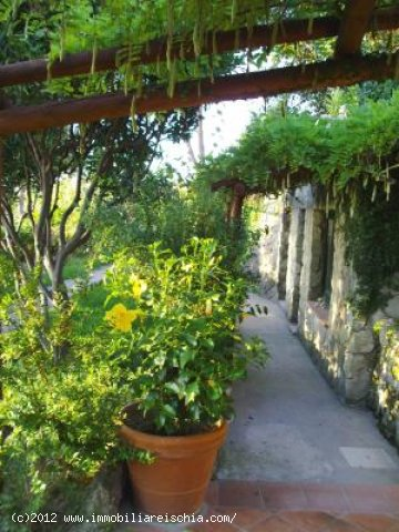 Villa il Mirto